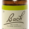 Wild Rose N°37 Fleur de Bach Original - Flacon de 20ml